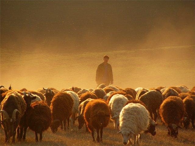 Nick Vuychichs column: Shepherd and sheep